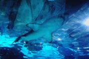 Sortida de tutoria de 1r d'ESO – Gener 2018 – Aquarium